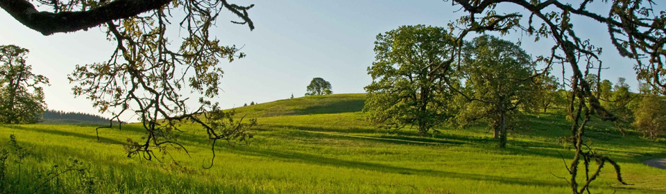 oak-savannah-landscape