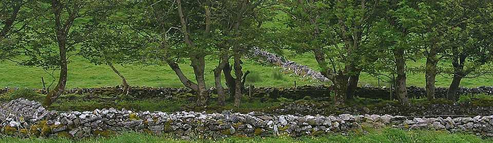 trees-near-knocknara
